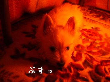 kotatumuri3.png