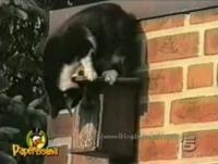 ネコのハプニング動画
