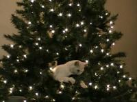 ネコがクリスマスツリーの上でくつろぐ