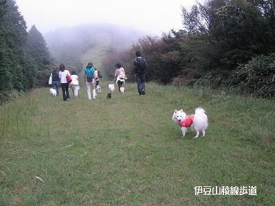 霧は晴れたり曇ったり