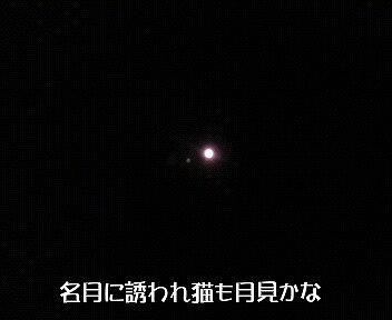 お月見だよ