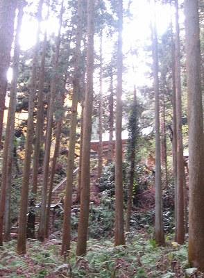 山の中の神社