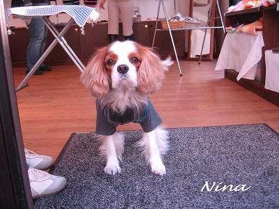 看板犬ニーナちゃん