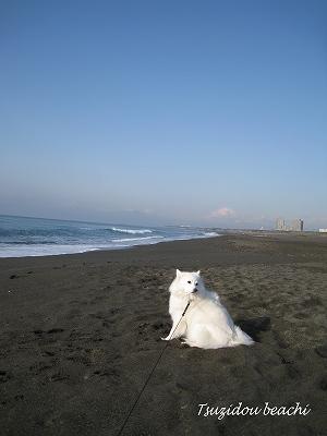 富士山が時折顔を出します。