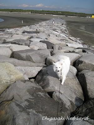 砂浜侵食防止の消波ブロック