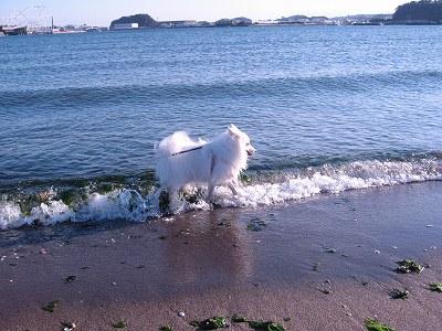これでも海なのっ?!