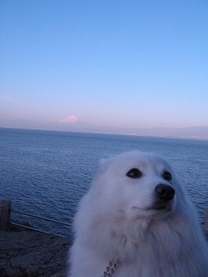富士山、見えますか?