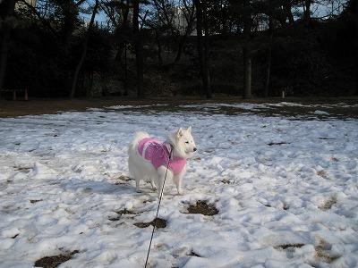 日陰はまだ雪が
