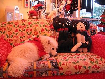 やっぱりこのソファーが好き