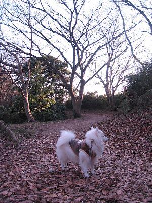 鎌倉に続く尾根道