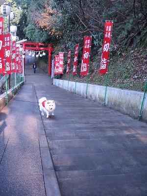 富岡八幡宮in横浜