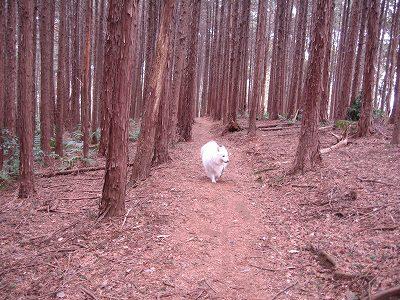 杉の保安林