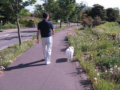 パパとの散歩は楽しいな