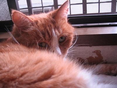 窓際の辰子さん