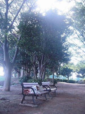 木陰で休憩