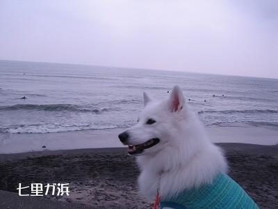 やっぱり海を見て