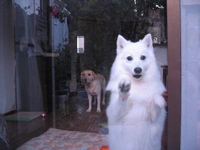 ガラス越しです。「お庭で何してるの~」
