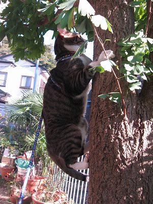 木登りだって得意だよ