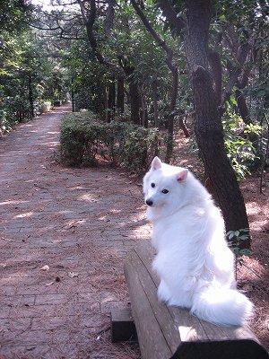 防砂林の中の小道