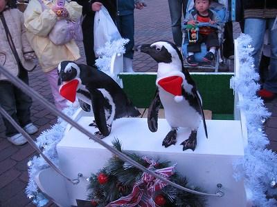 ペンギンさんの出番待ち