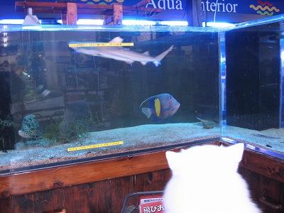 鮫のいる水槽