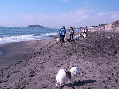 浜辺をお散歩