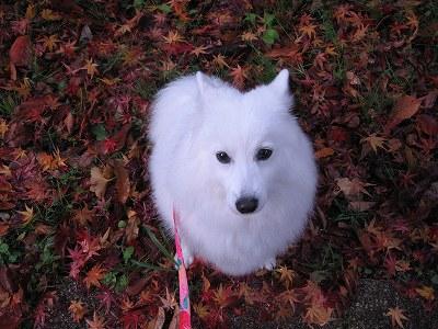 落葉が綺麗