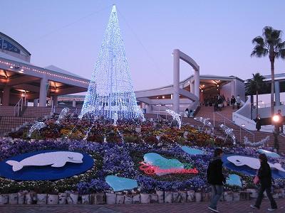 クリスマスイルミ in 八景島