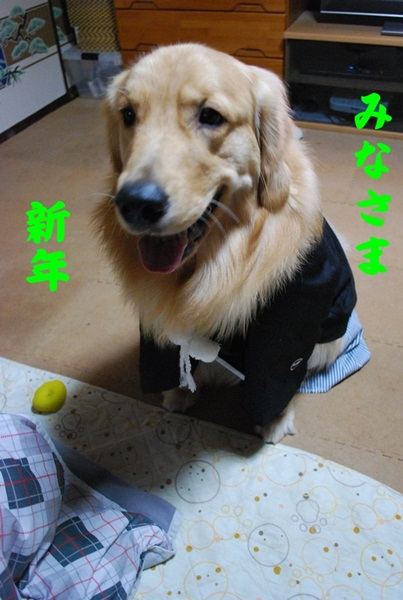 2012 01 01 01