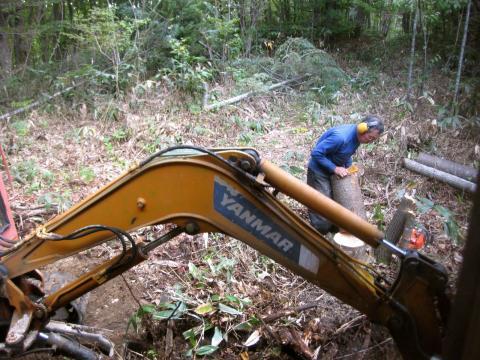 木の掘り起こし927
