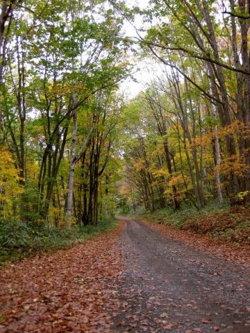 森の道1014