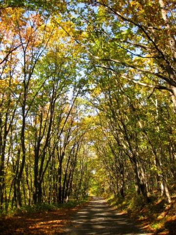 森の道1019