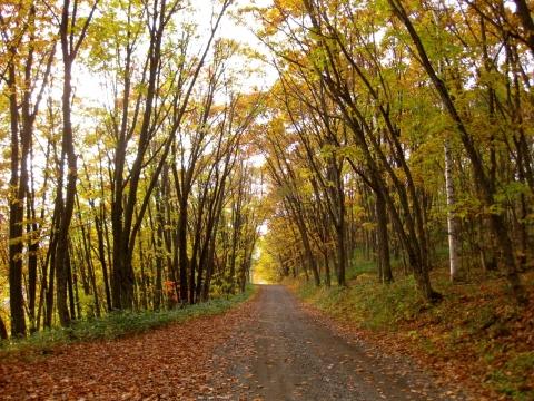 森の道1022