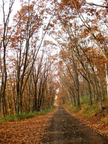 森の道1030