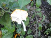 006_convert_20111114095720.jpg