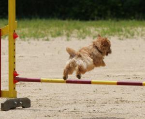 華麗にジャンプ!