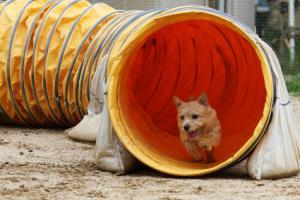 トンネルを抜けると、そこは・・・・・・チーズ(ご褒美)頂戴♪