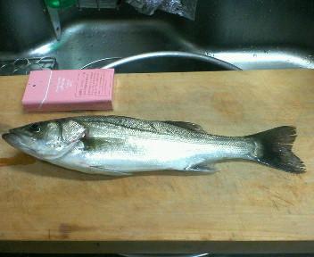 0924fish01.jpg