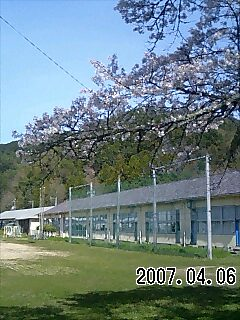 弥富中学校桜1