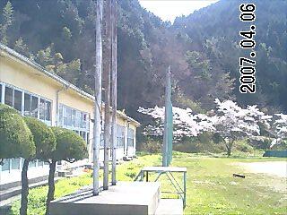 弥富中学校桜3