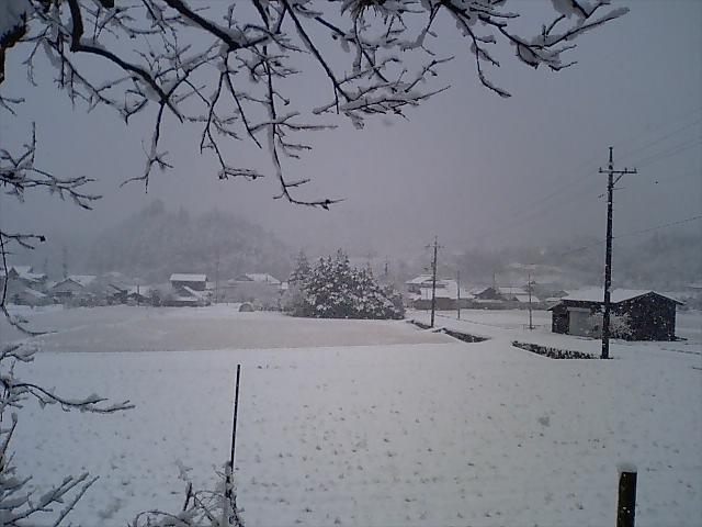弥富の雪070202