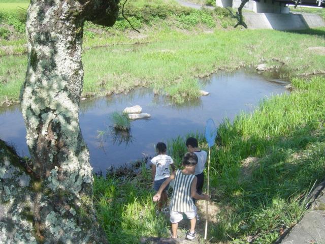弥富の川06夏1