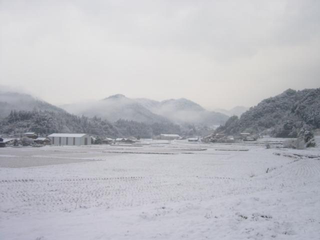 弥富の雪0701b