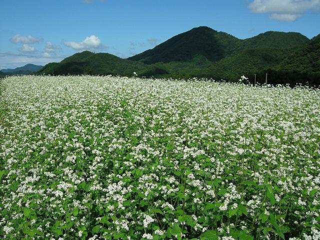07年上田原のそば畑