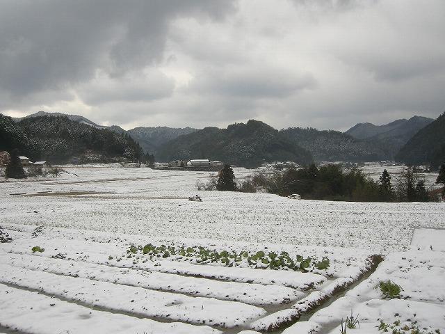 弥富の雪080204