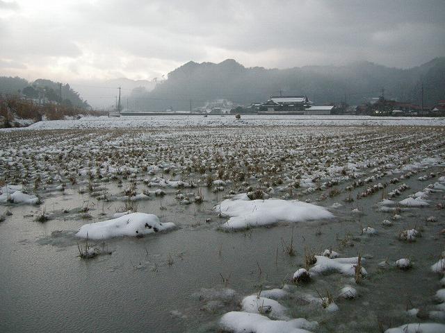弥富 雪の田んぼ080204