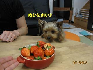 イチゴだよー