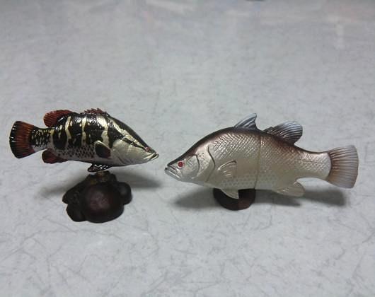 アカメ2匹