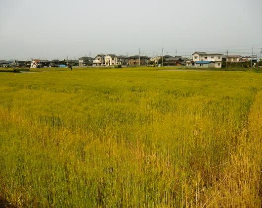 松山市郊外