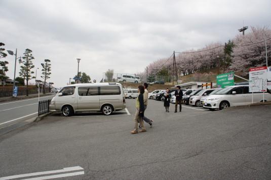 桜 歌舞伎文化公園 駐車場